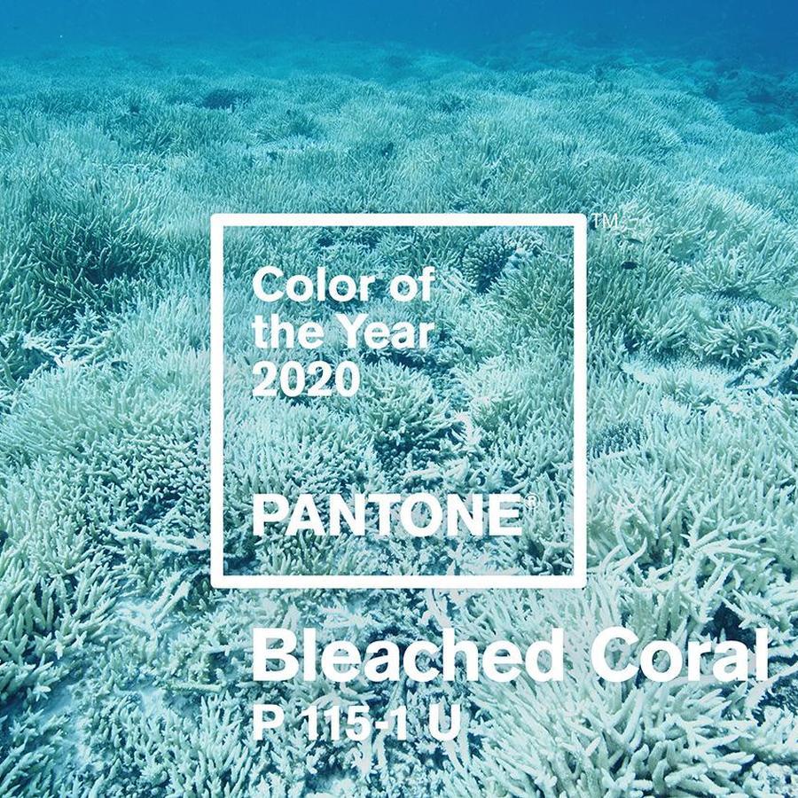 رنگ مرجانی سفید